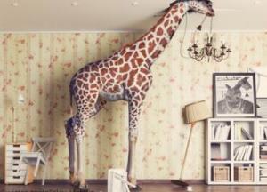 Oh je, es sind Tiere im Haus
